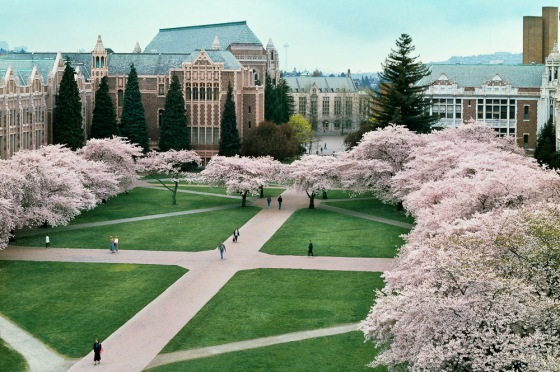 Cherry blossoms in the Quad as seen from the roof of the Art Building